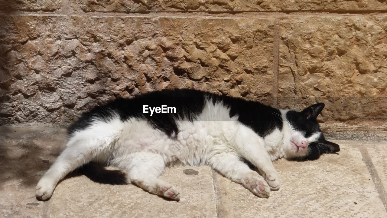 domestic, domestic animals, pets, mammal, animal themes, animal, cat, domestic cat, one animal, vertebrate, feline, relaxation, sleeping, lying down, no people, resting, wall - building feature, day, indoors, young animal, whisker