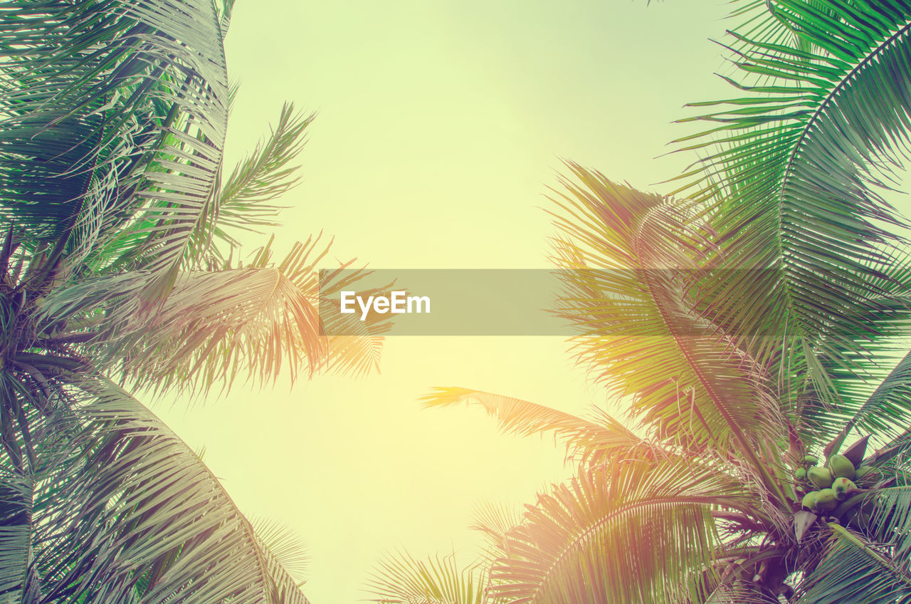 palm tree, palm frond, palm leaf, growth, nature, low angle view, tree, beauty in nature, no people, frond, sky, clear sky, close-up, outdoors, tranquility, day, leaf