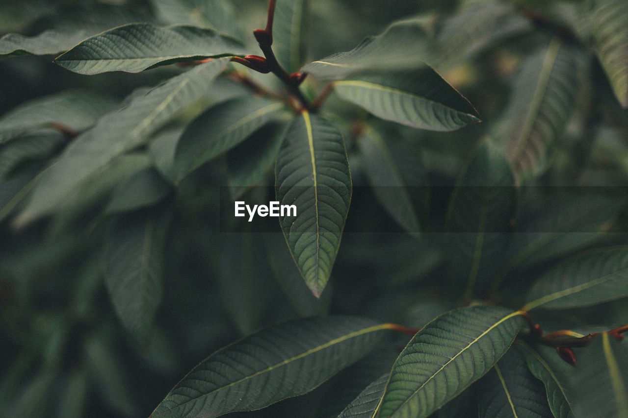 leaf, green color, growth, plant, nature, day, beauty in nature, no people, close-up, outdoors, fragility, freshness