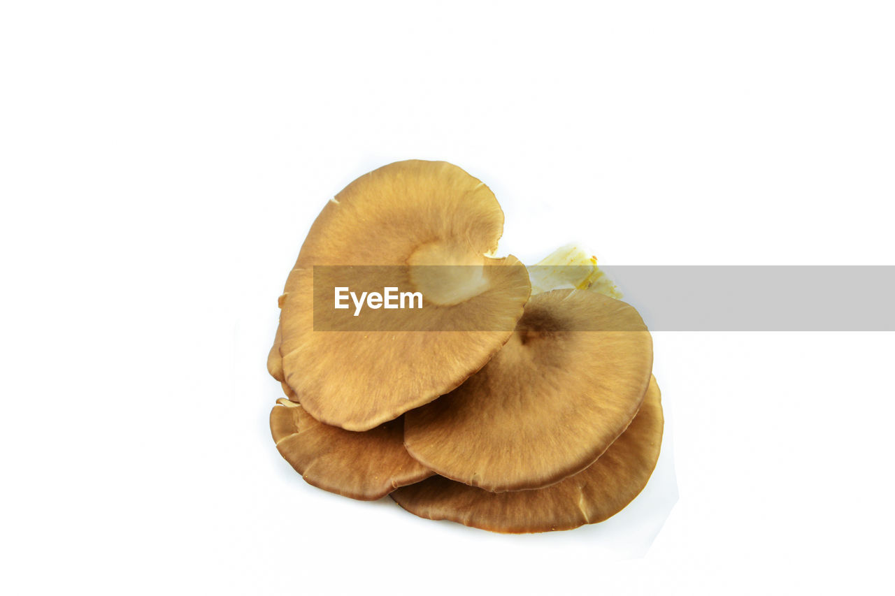 studio shot, white background, food and drink, indoors, food, healthy eating, copy space, freshness, wellbeing, no people, close-up, still life, fungus, cut out, fruit, mushroom, vegetable, group of objects, edible mushroom, raw food
