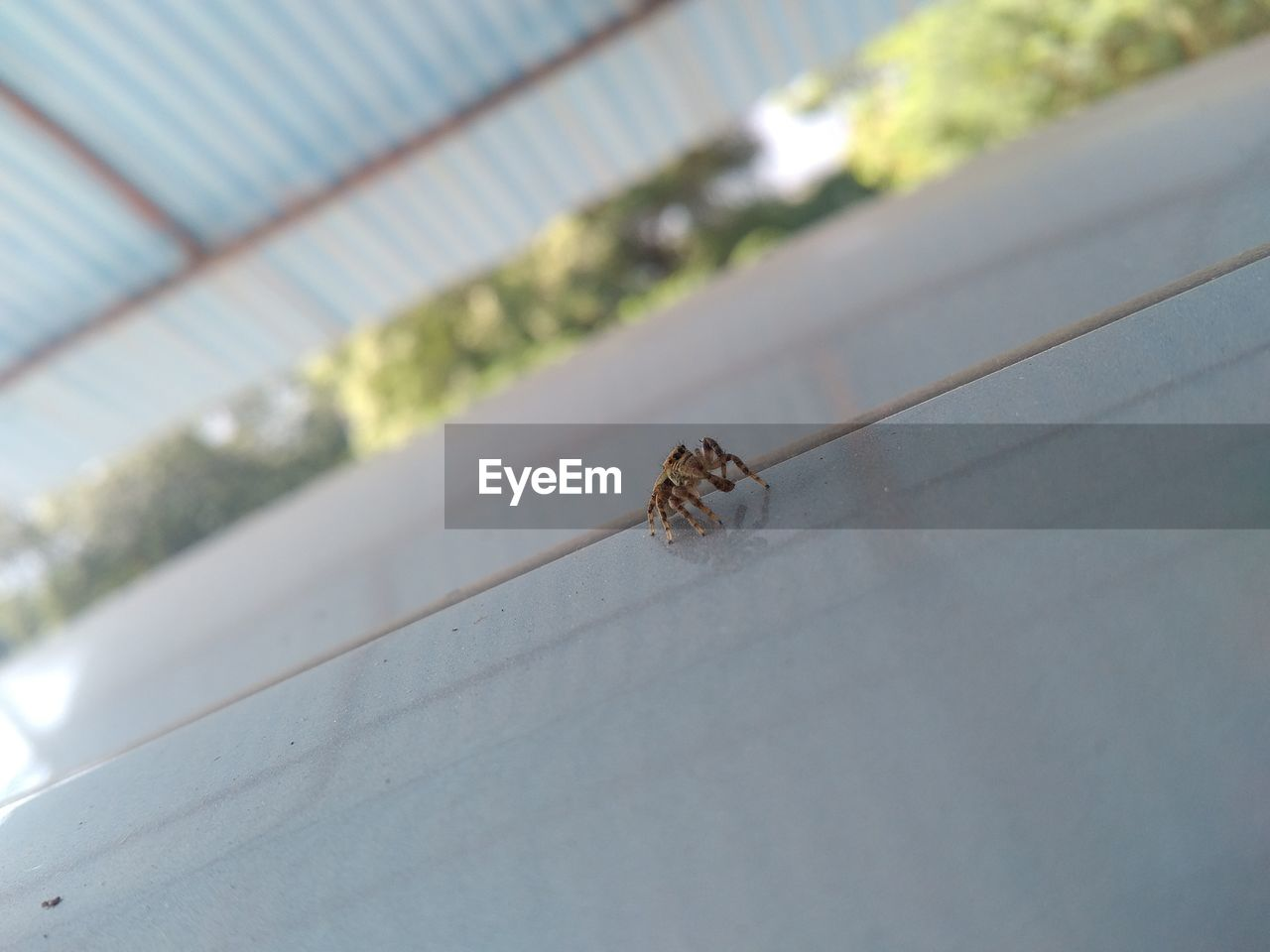 insect, animal themes, animals in the wild, one animal, animal wildlife, spider, day, no people, outdoors, close-up, nature