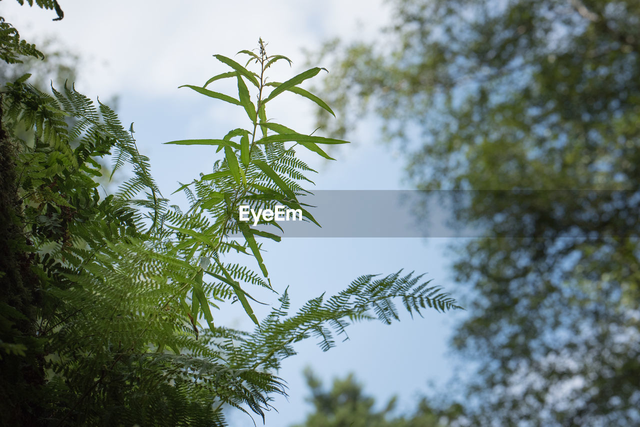 growth, tree, low angle view, nature, green color, day, no people, beauty in nature, outdoors, sky, leaf, branch, close-up, freshness