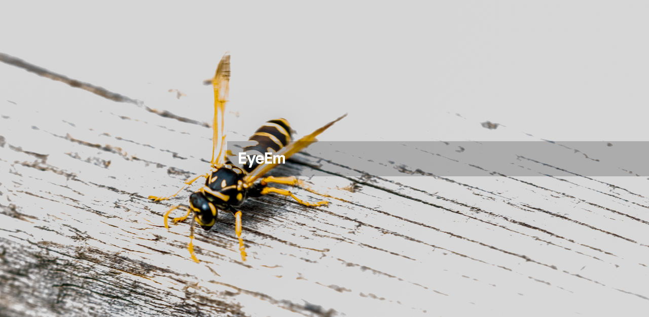 wood - material, no people, close-up, insect, invertebrate, animal, animals in the wild, animal themes, nature, day, indoors, high angle view, animal wildlife, one animal, metal, selective focus, yellow, water