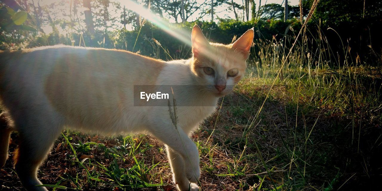 domestic cat, one animal, domestic animals, animal themes, pets, feline, cat, mammal, grass, day, no people, outdoors, portrait, standing, sitting, nature, close-up