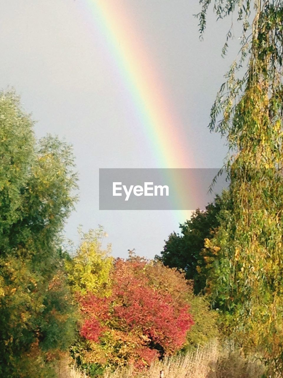 rainbow, tree, multi colored, nature, beauty in nature, scenics, autumn, double rainbow, no people, tranquil scene, outdoors, day, tranquility, idyllic, growth, landscape, sky, natural phenomenon, leaf