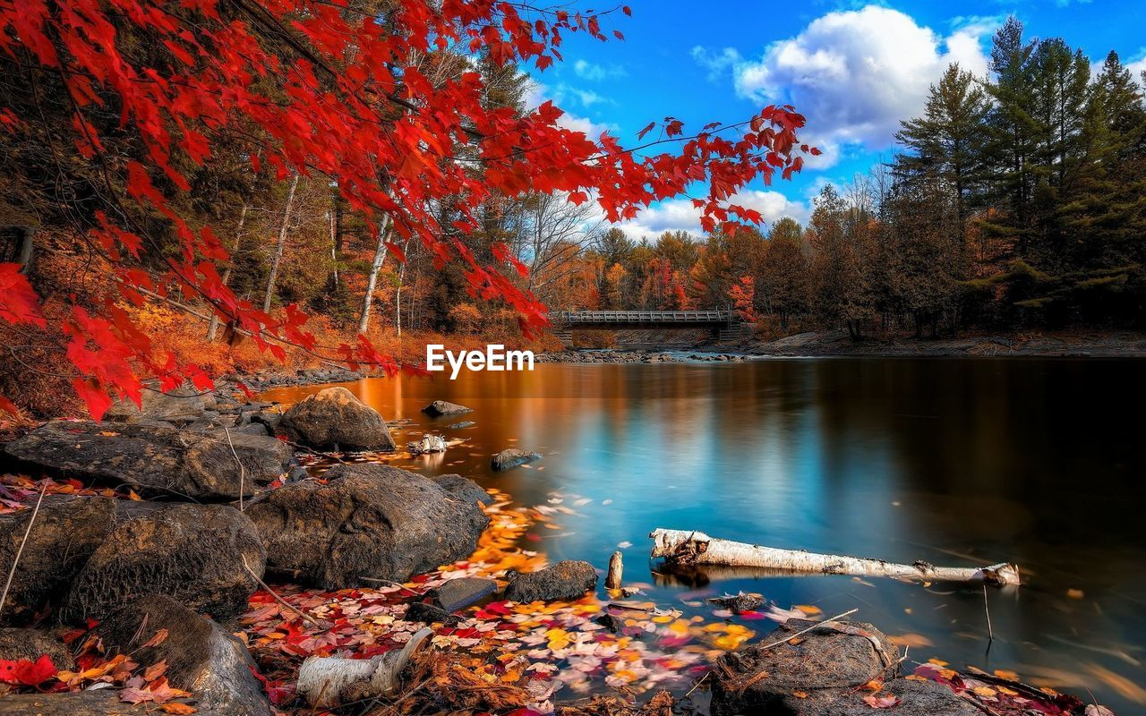 autumn, water, beauty in nature, lake, tree, change, nature, scenics - nature, plant, tranquility, tranquil scene, reflection, orange color, sky, day, plant part, non-urban scene, no people, leaf, outdoors, autumn collection
