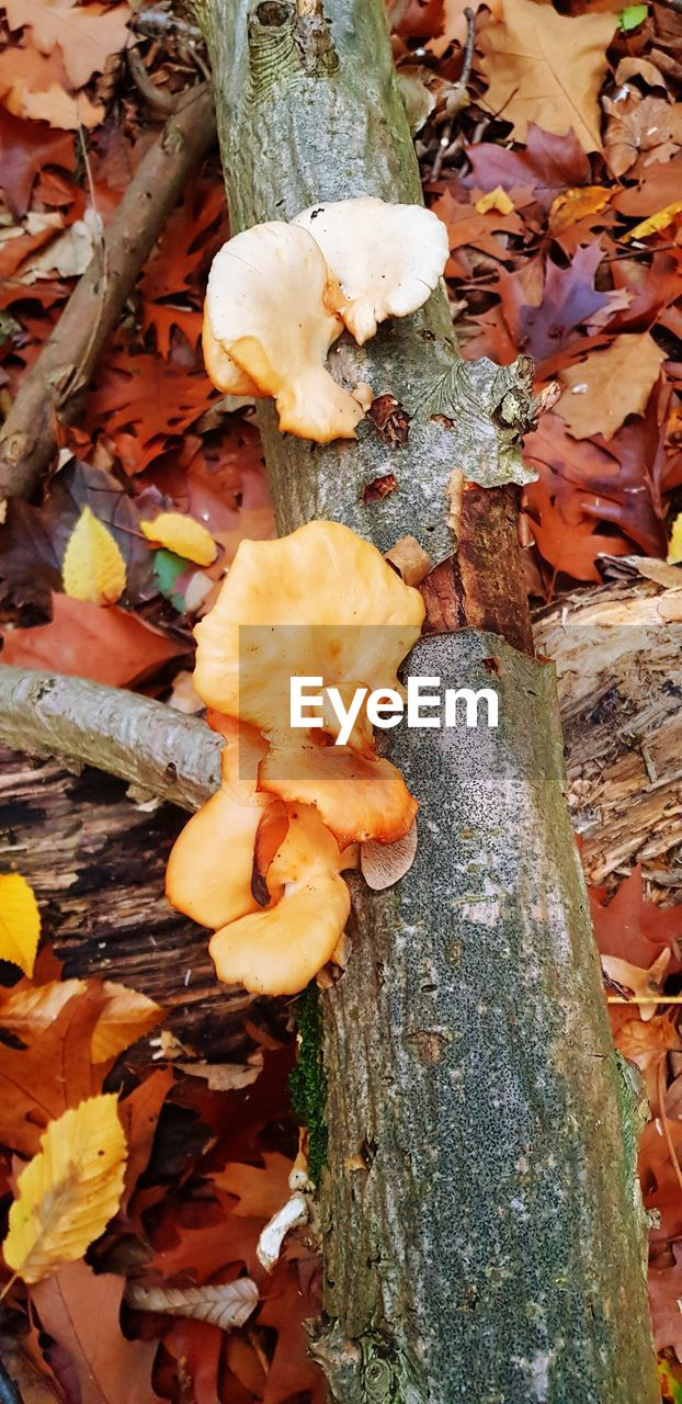 plant, beauty in nature, nature, close-up, no people, wood - material, growth, fungus, day, mushroom, tree, vegetable, food, tree trunk, high angle view, trunk, field, land, leaf, flower, outdoors, leaves, toadstool, bark