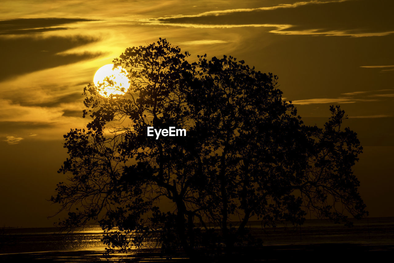 sunset, tree, beauty in nature, nature, tranquility, scenics, sky, tranquil scene, silhouette, sun, idyllic, water, cloud - sky, outdoors, no people, growth, sunlight, sea, horizon over water, day