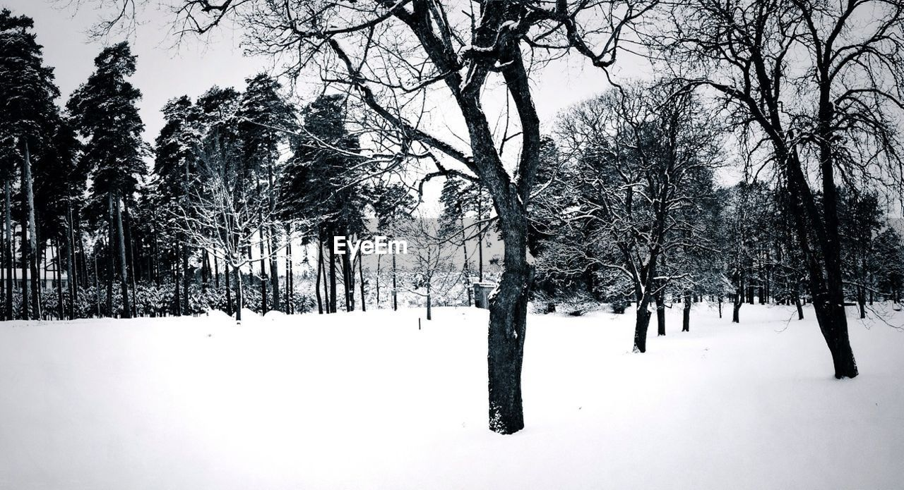 snow, winter, cold temperature, nature, tranquility, tree, weather, beauty in nature, white color, tranquil scene, scenics, outdoors, landscape, no people, day, bare tree