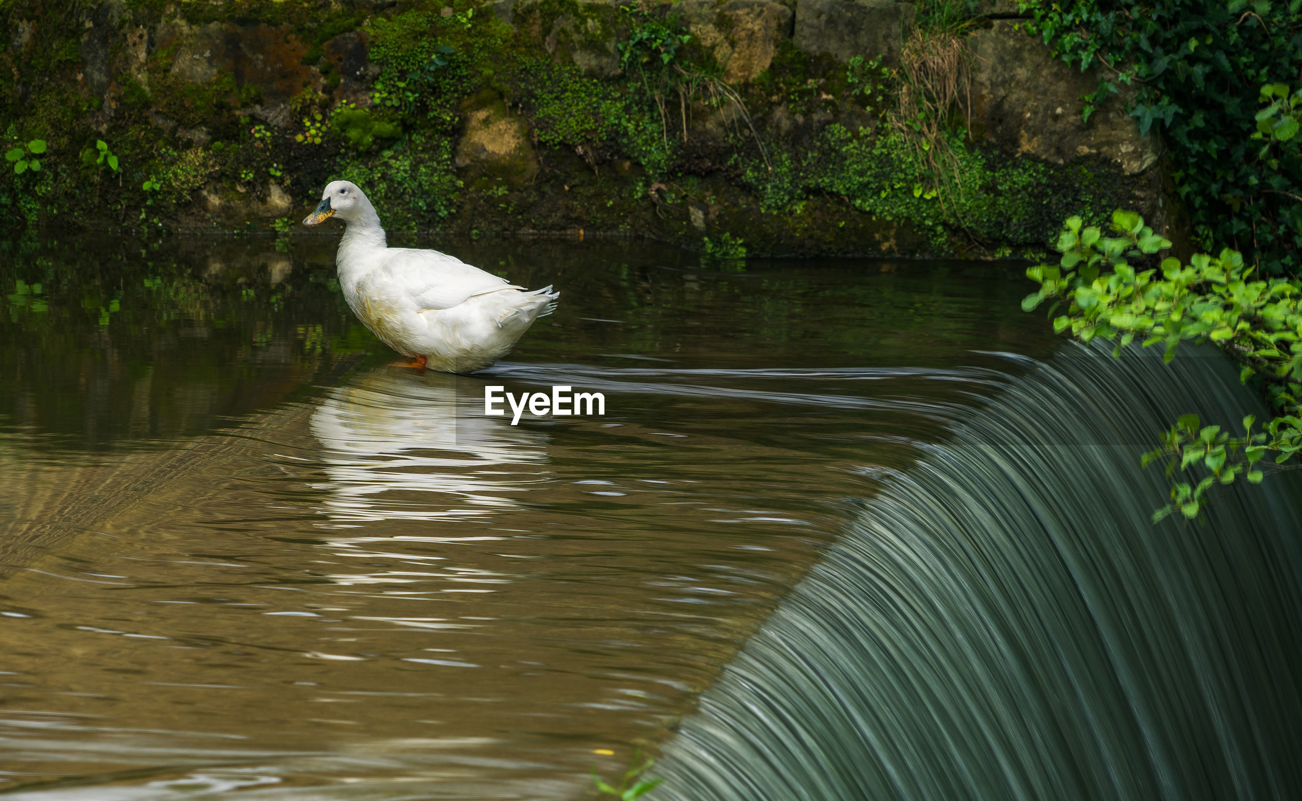 VIEW OF WHITE BIRD PERCHING ON A LAKE