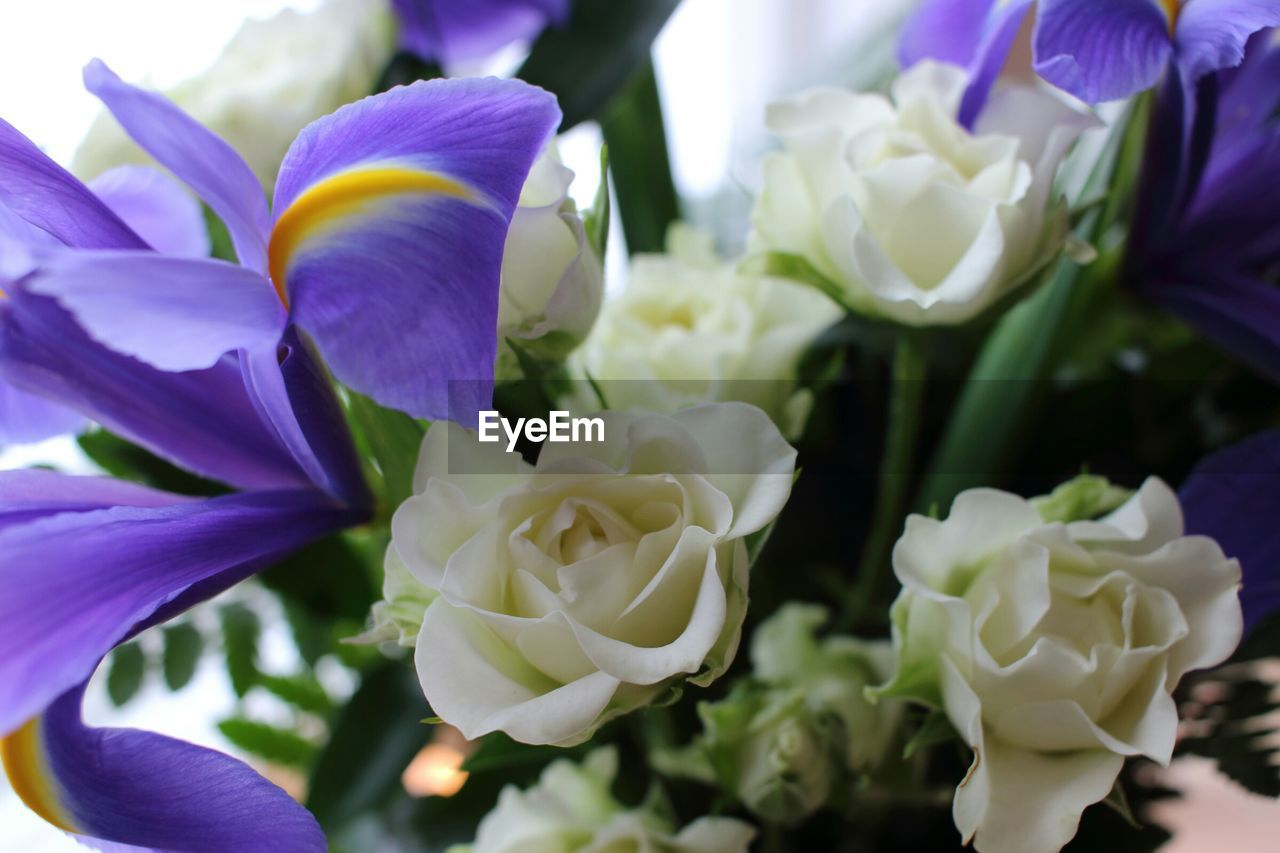 High angle view of iris flowers with roses