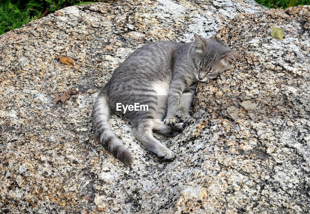animal themes, one animal, animal, domestic cat, feline, mammal, cat, domestic, pets, vertebrate, domestic animals, no people, relaxation, high angle view, day, rock, solid, nature, rock - object, resting, whisker, tabby