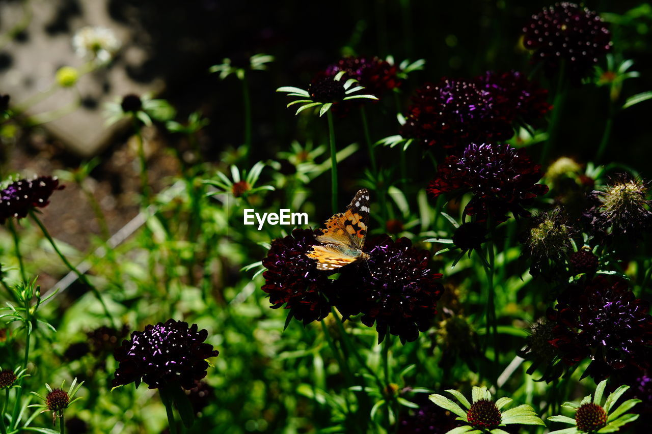 plant, flower, flowering plant, freshness, growth, animal wildlife, beauty in nature, vulnerability, animal themes, fragility, animals in the wild, flower head, animal, petal, nature, invertebrate, insect, bee, close-up, pollination, no people, outdoors, purple