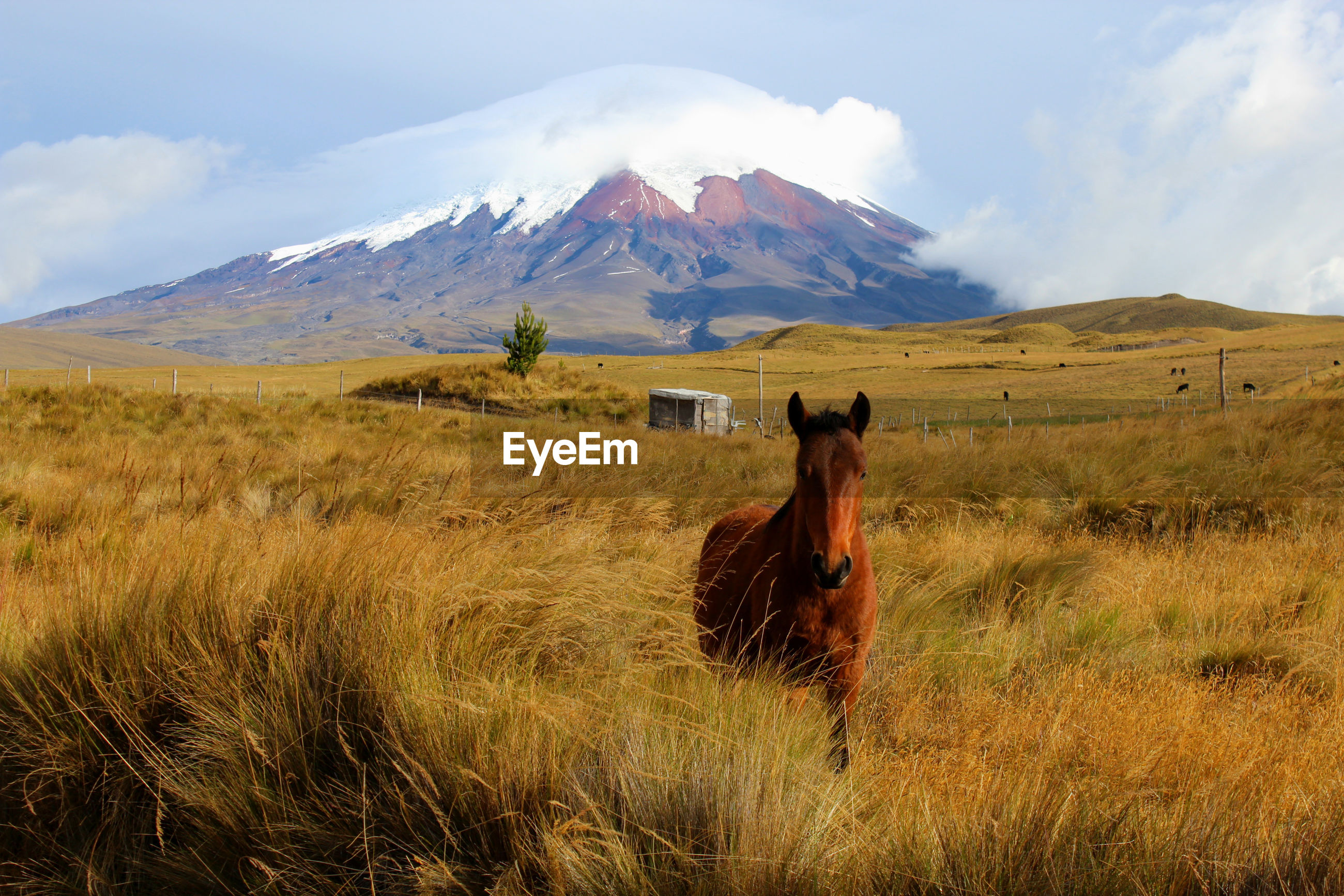Horse standing on field against mountain range