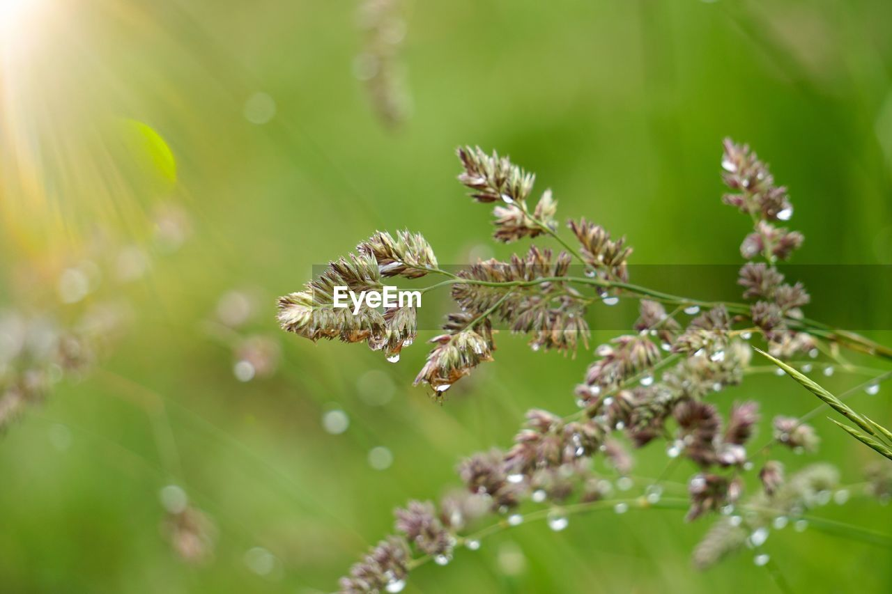 plant, growth, close-up, beauty in nature, fragility, selective focus, flower, vulnerability, day, nature, no people, flowering plant, freshness, outdoors, focus on foreground, green color, tranquility, sunlight, leaf, plant part, flower head