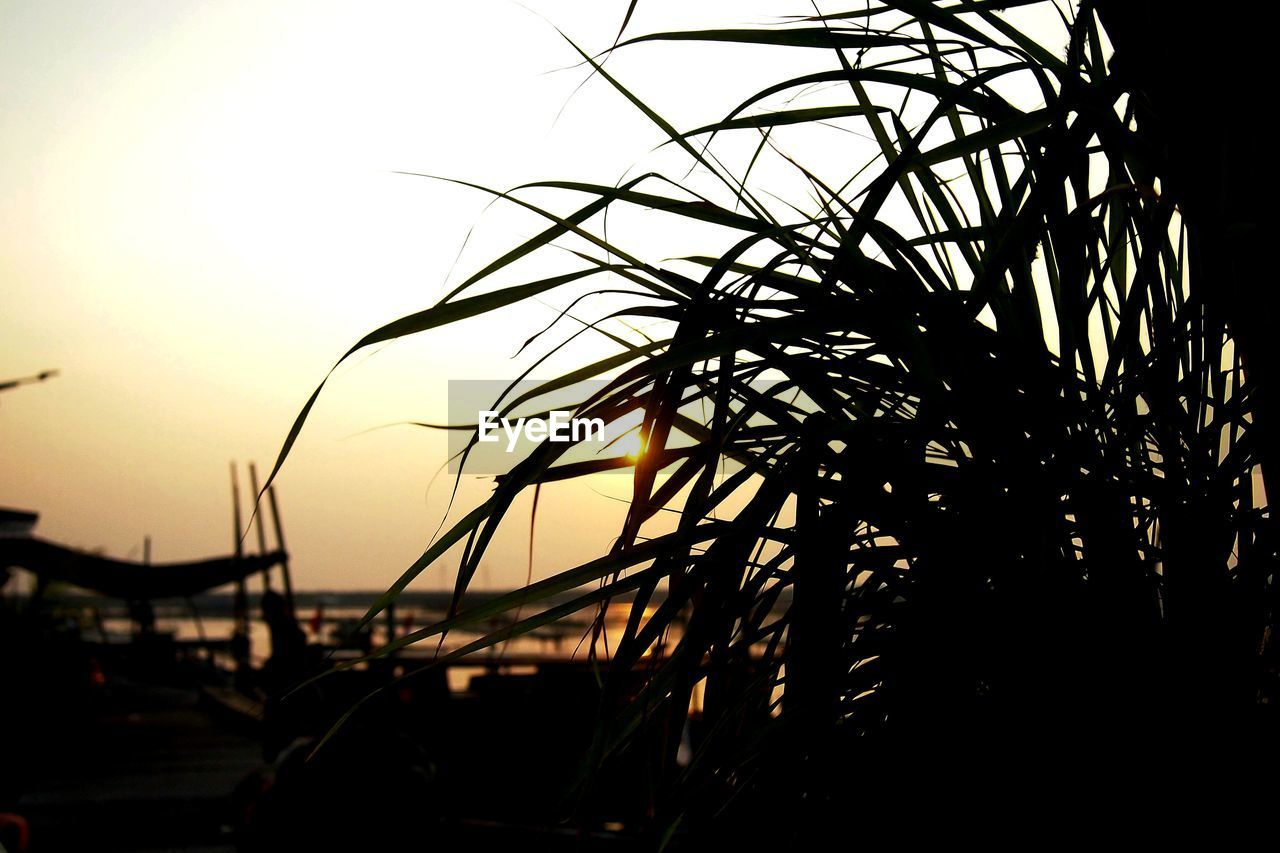 silhouette, sunset, sky, plant, beauty in nature, nature, tranquility, no people, tree, scenics - nature, tranquil scene, outdoors, focus on foreground, water, sun, growth, land, tropical climate, sunlight