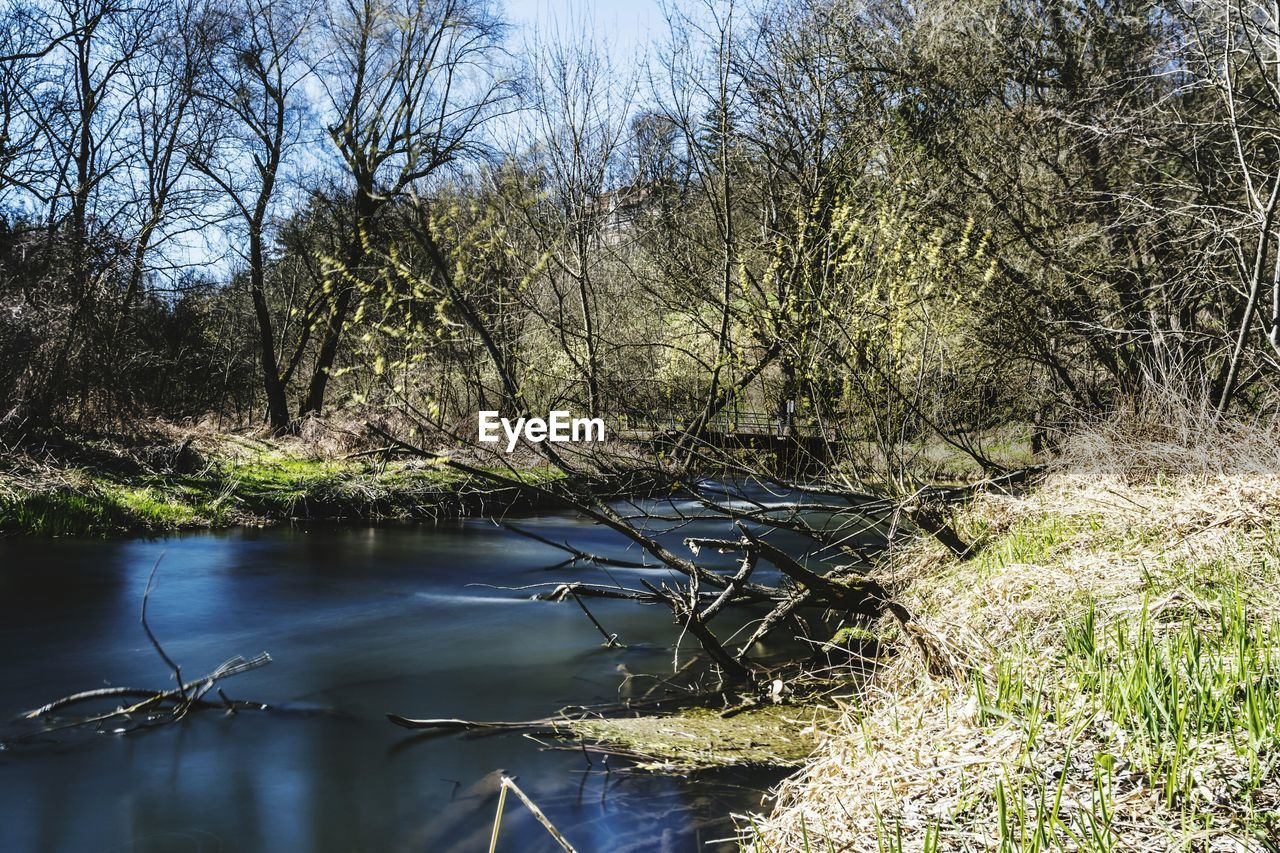 nature, water, tree, river, bare tree, no people, branch, outdoors, beauty in nature, growth, tranquility, day, landscape, scenics, grass, clear sky, sky