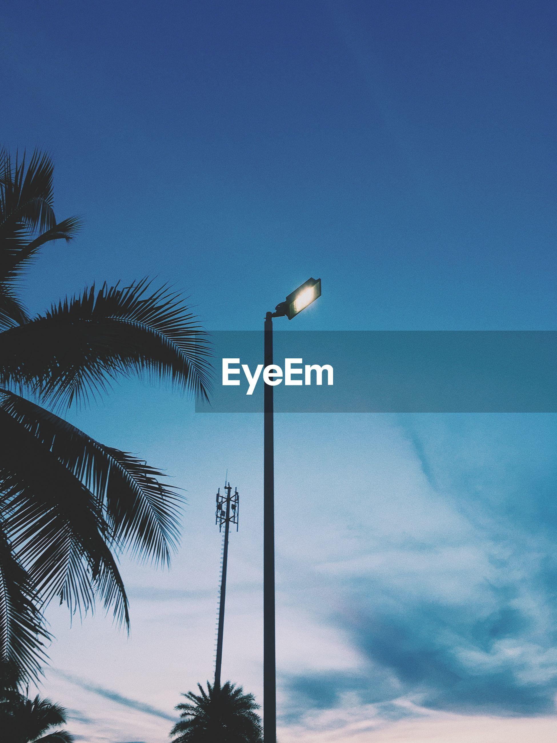 Low angle view of street light and palm tree against blue sky