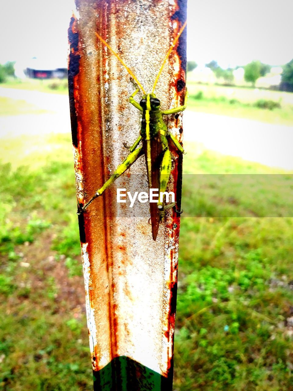 focus on foreground, close-up, nature, day, no people, plant, field, outdoors, land, rusty, tree trunk, green color, tree, growth, trunk, grass, metal, animal, post, animal themes, wooden post