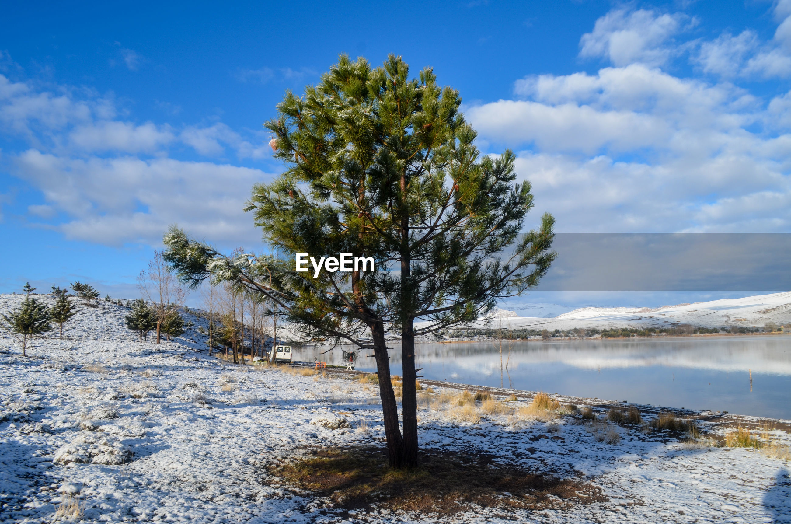TREES ON SNOW COVERED LAND DURING WINTER AGAINST SKY