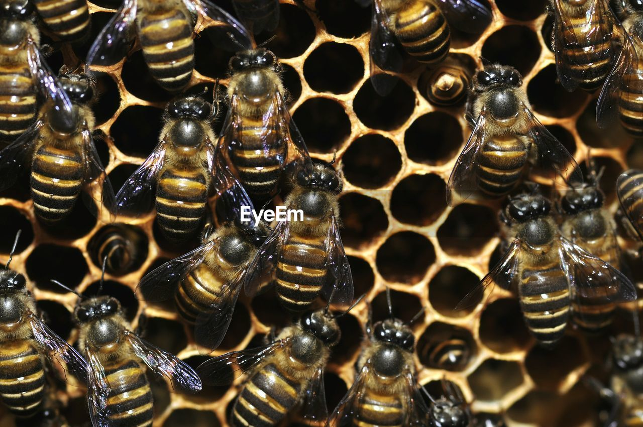 Full Frame Shot Of Bees On Beehive