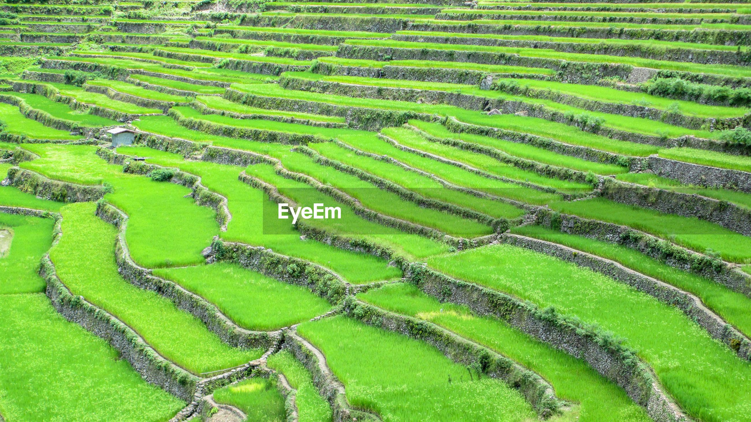High angle view of rice terraces on mountain