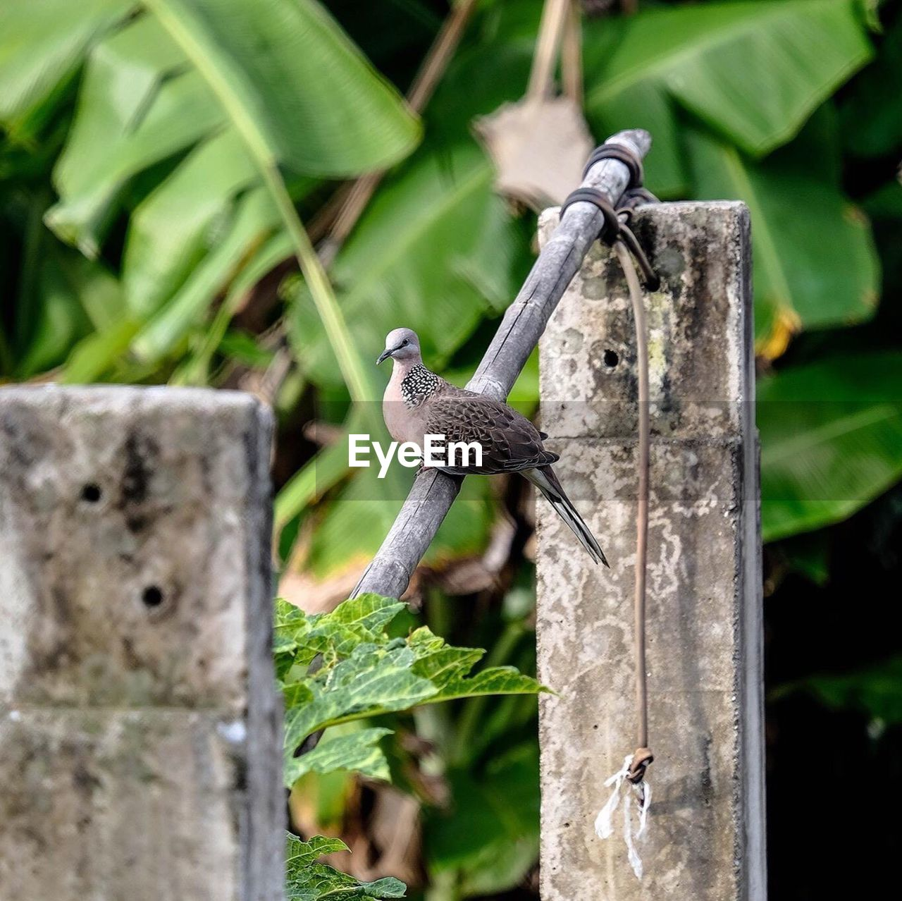 animals in the wild, animal themes, bird, animal wildlife, one animal, perching, no people, day, green color, focus on foreground, outdoors, leaf, nature, bird feeder, sparrow, close-up