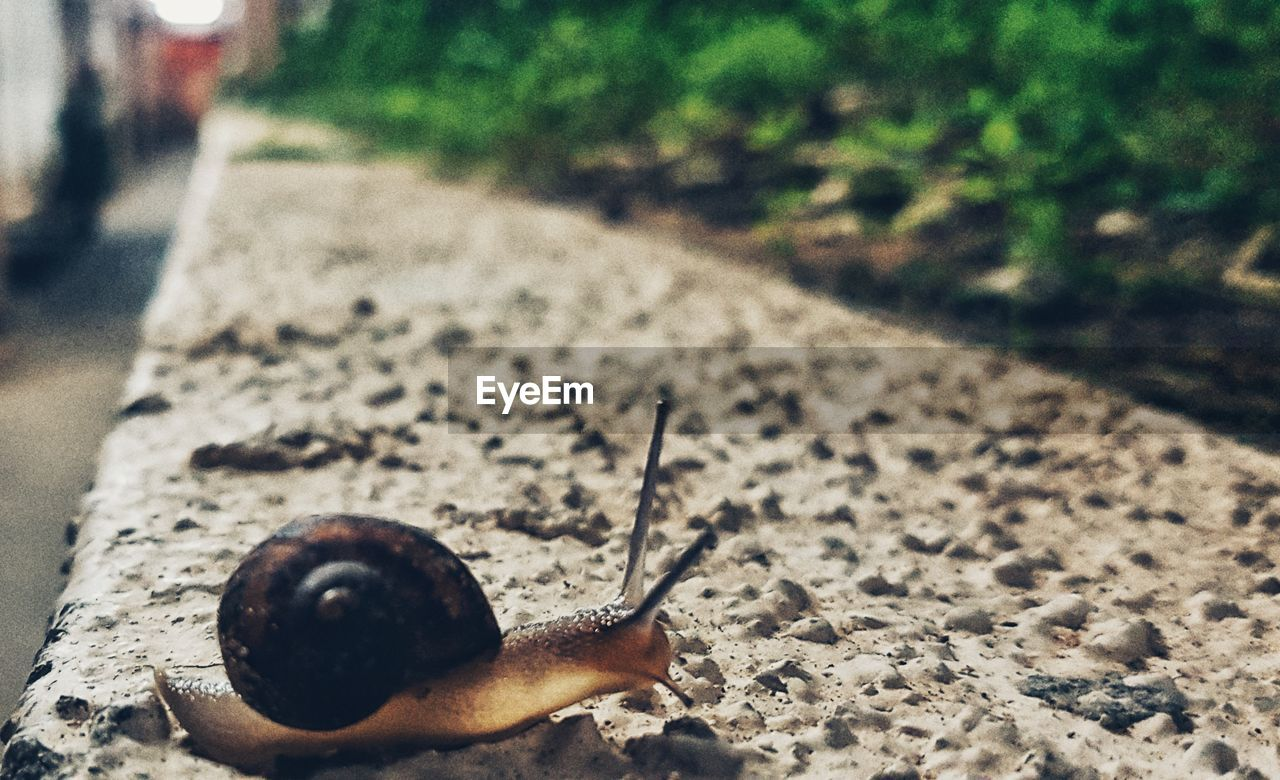 snail, animal themes, outdoors, one animal, animals in the wild, wildlife, day, nature, close-up, no people, fragility, slug