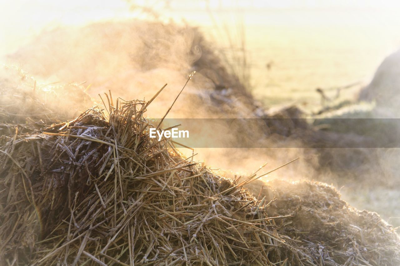 plant, close-up, nature, no people, focus on foreground, selective focus, day, dry, land, tranquility, sky, beauty in nature, sunlight, sunset, grass, outdoors, field, hay, fragility, twig