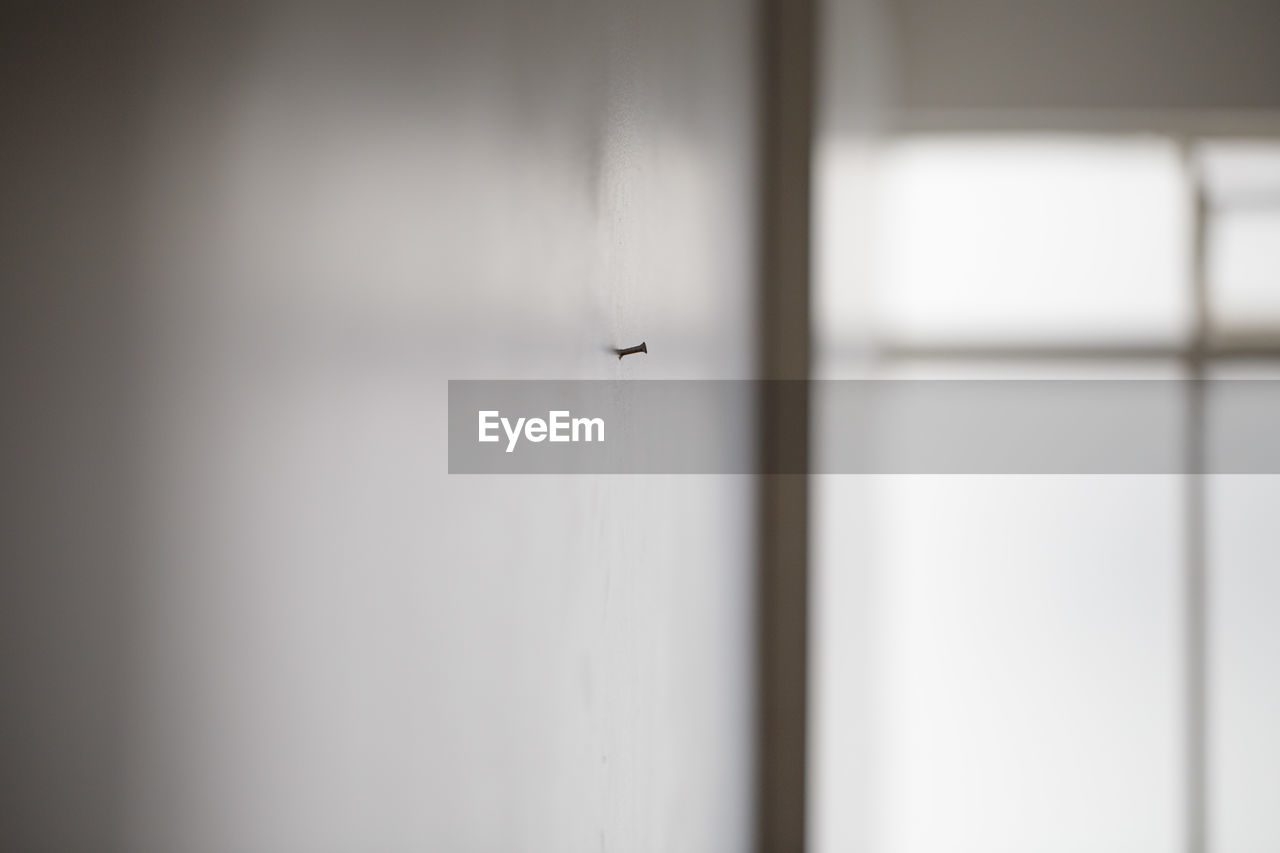 flying, one animal, airplane, insect, mid-air, animal themes, air vehicle, animals in the wild, day, indoors, no people, close-up, housefly, tiny, nature, bird, sky, airplane wing