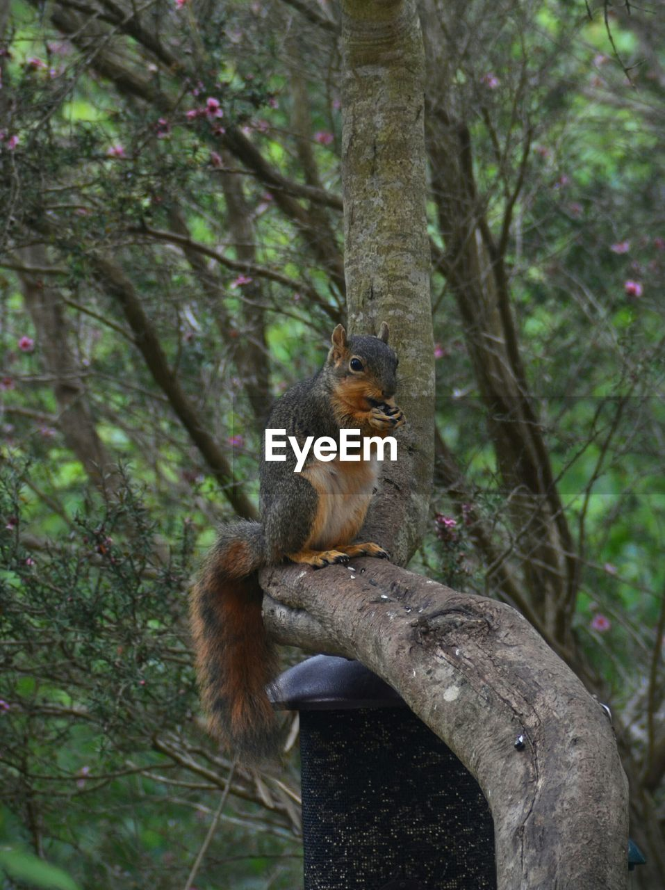 Close-Up Of Squirrel On Branch In Forest