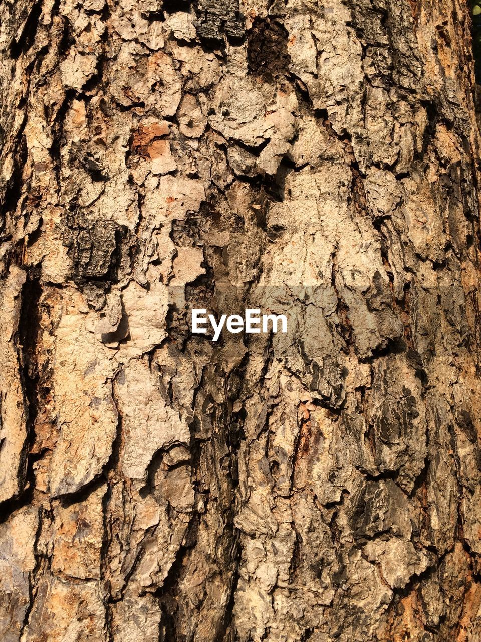 textured, backgrounds, cracked, close-up, tree trunk, rough, full frame, textured effect, bark, tree, nature, brown, no people, wood - material, pattern, day, outdoors