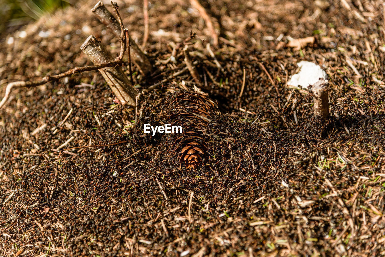 land, no people, field, selective focus, nature, day, plant, animal, animal themes, close-up, invertebrate, food, insect, outdoors, food and drink, sunlight, grass, dirt, dry, animal wildlife, poisonous