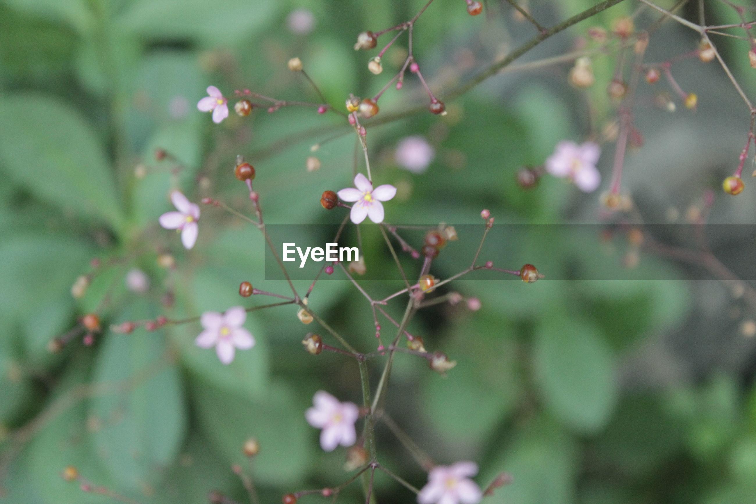 Beautiful flowering