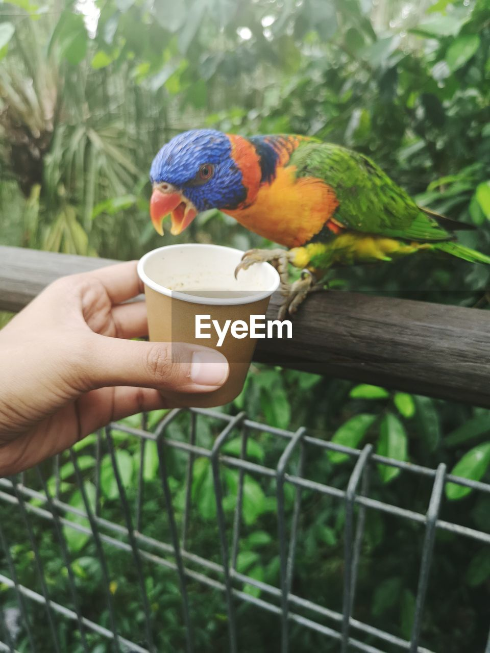 PERSON HOLDING A BIRD IN CUP
