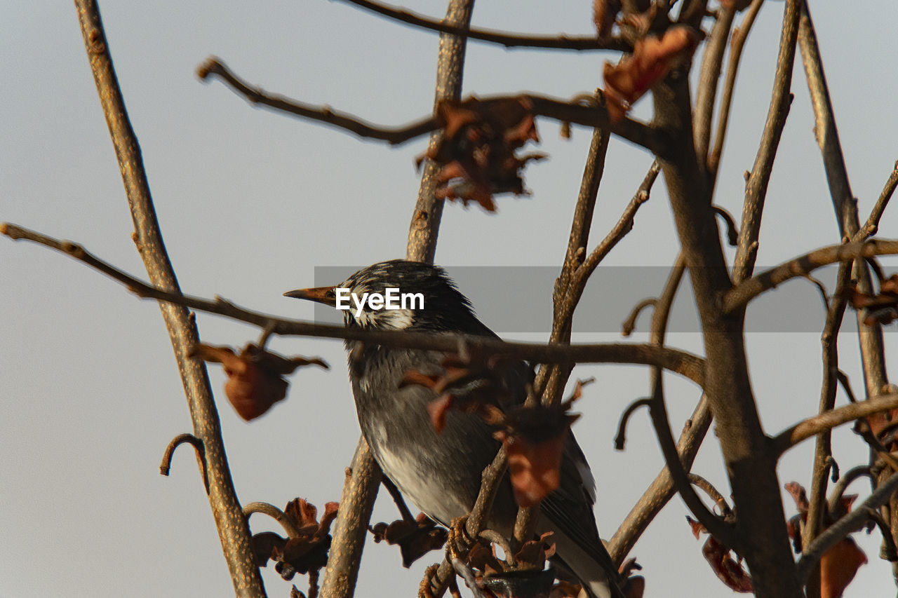LOW ANGLE VIEW OF BIRDS PERCHING ON BRANCH