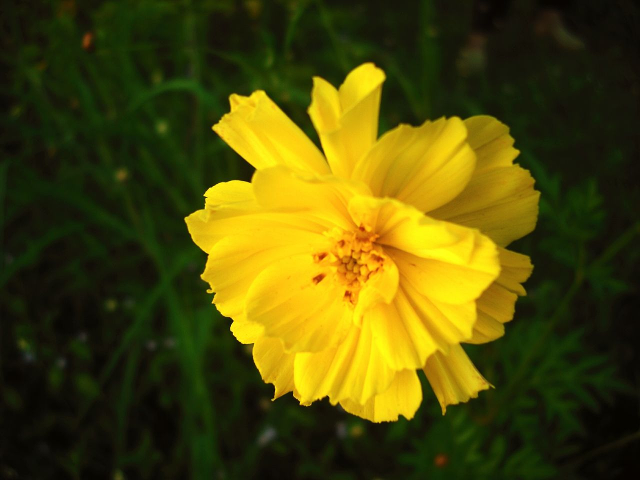 flower, yellow, petal, beauty in nature, nature, fragility, flower head, plant, growth, freshness, blooming, outdoors, no people, close-up, day