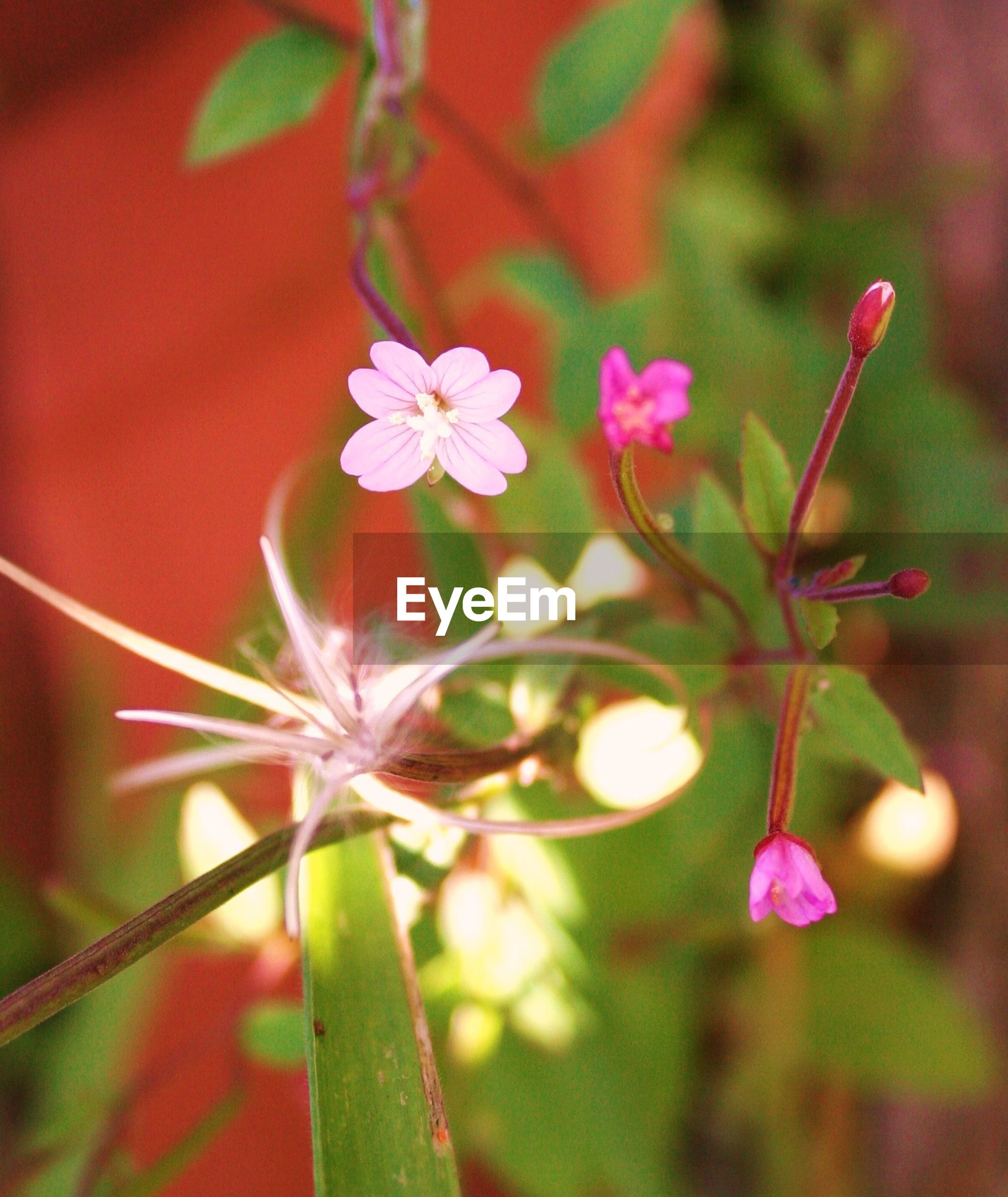 Pink flowers growing outdoors