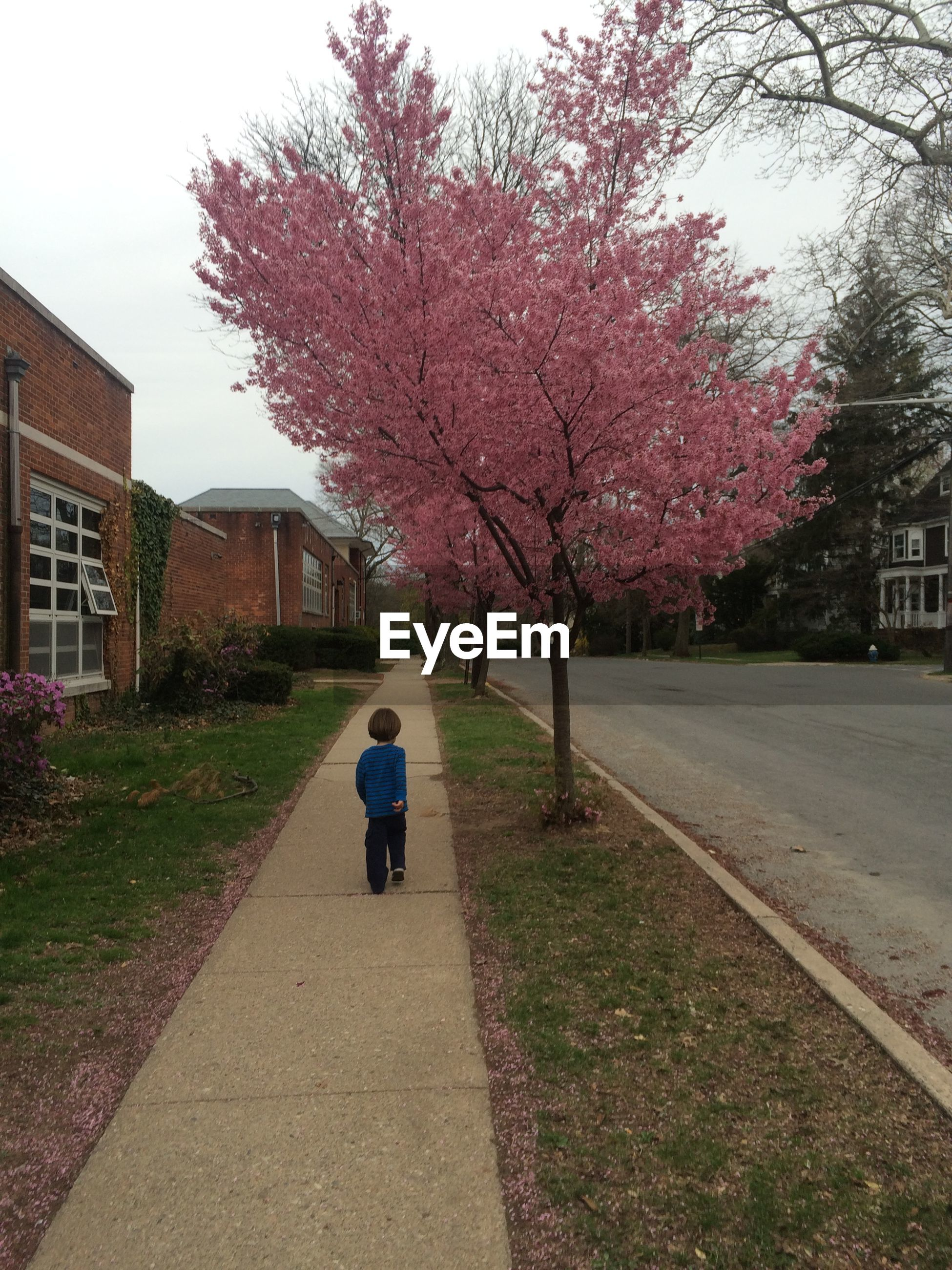 Boy walking past cherry trees