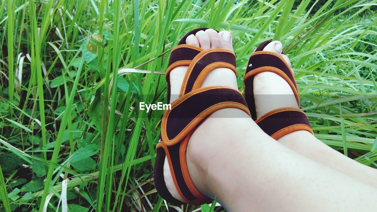 Low section of person wearing sandals sitting on grassy field