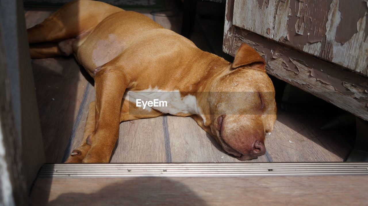 mammal, animal themes, domestic animals, one animal, pets, dog, no people, lying down, sleeping, high angle view, relaxation, brown, day, close-up, outdoors