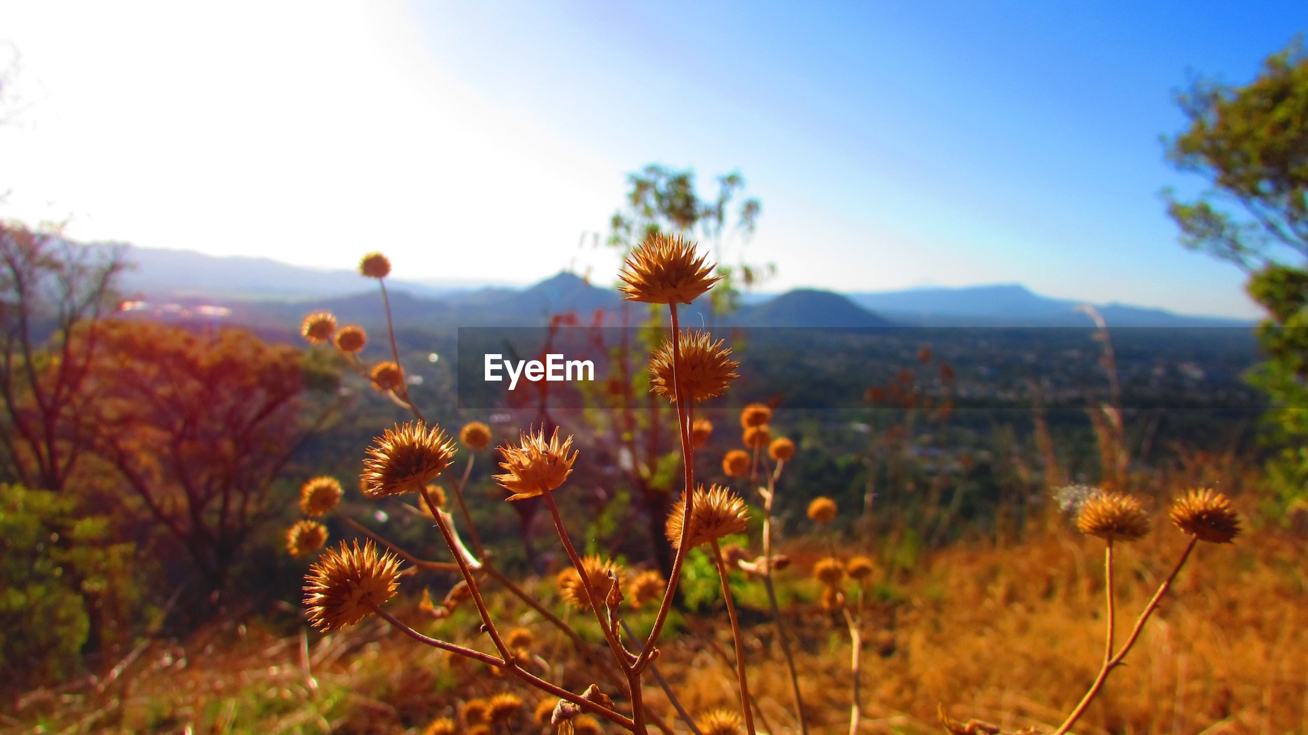 Flowers growing by landscape against sky