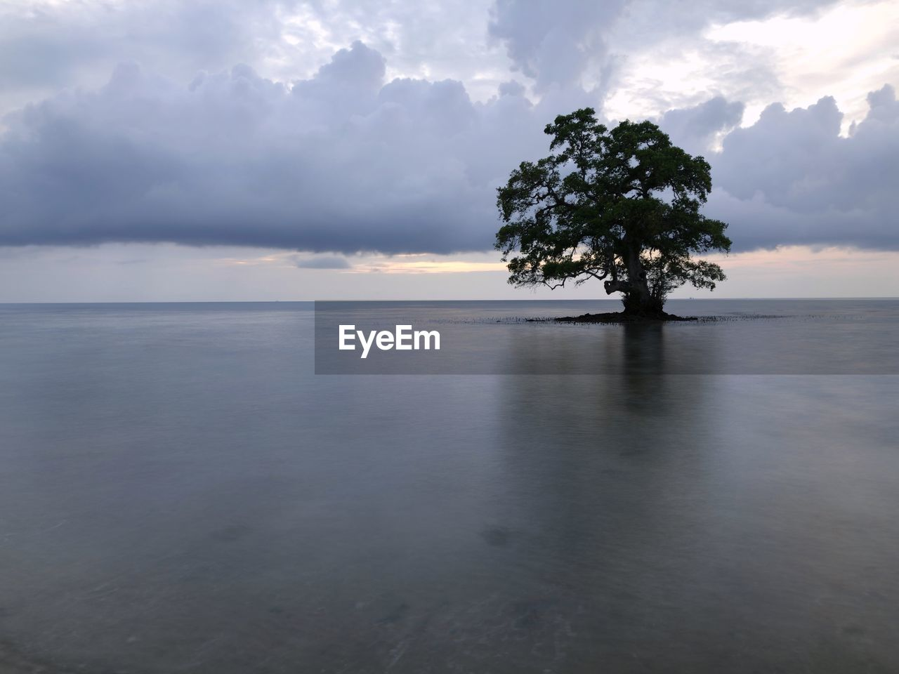sky, water, scenics - nature, cloud - sky, sea, tranquility, tranquil scene, beauty in nature, tree, horizon over water, horizon, nature, no people, plant, land, waterfront, idyllic, non-urban scene, beach, outdoors