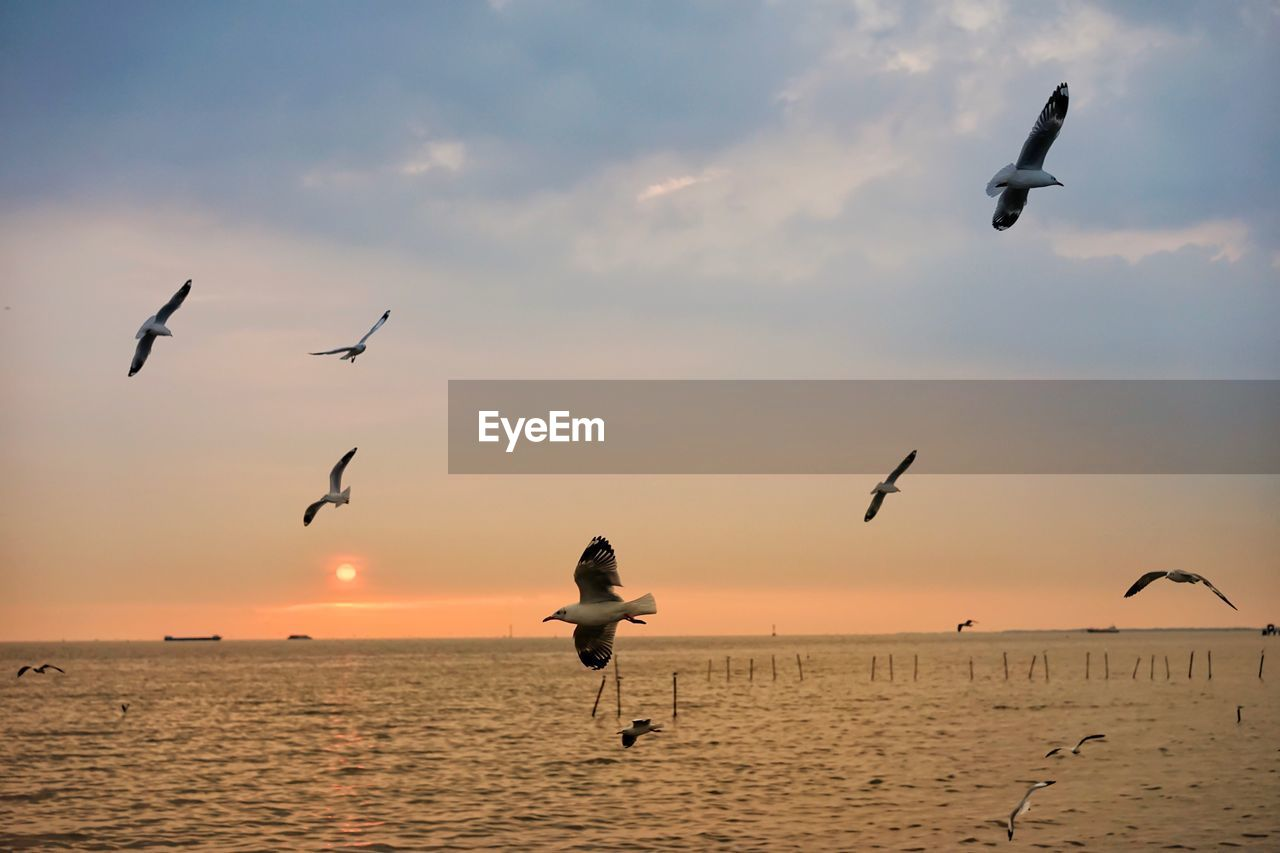 sky, sunset, bird, animals in the wild, animal wildlife, animal themes, animal, sea, vertebrate, group of animals, flying, water, beauty in nature, scenics - nature, orange color, mid-air, horizon over water, nature, horizon, seagull, flock of birds