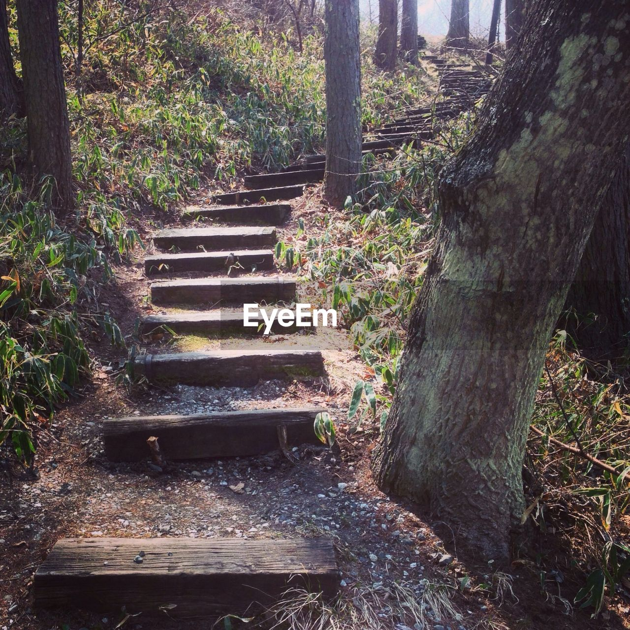steps, steps and staircases, staircase, tree, day, no people, tree trunk, nature, forest, outdoors