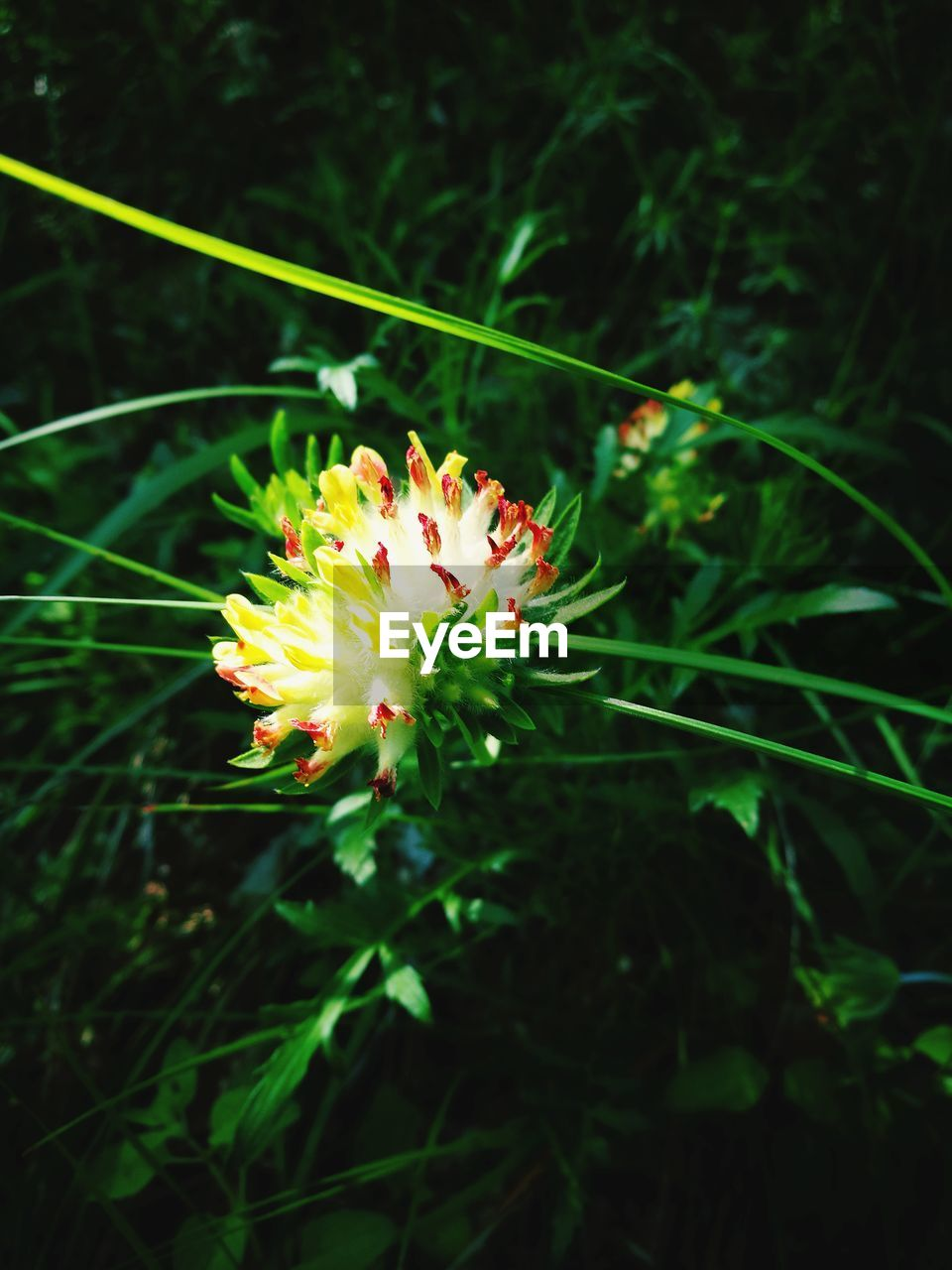 plant, flowering plant, flower, freshness, beauty in nature, fragility, vulnerability, growth, petal, close-up, flower head, inflorescence, nature, day, no people, focus on foreground, selective focus, land, outdoors, green color, pollen