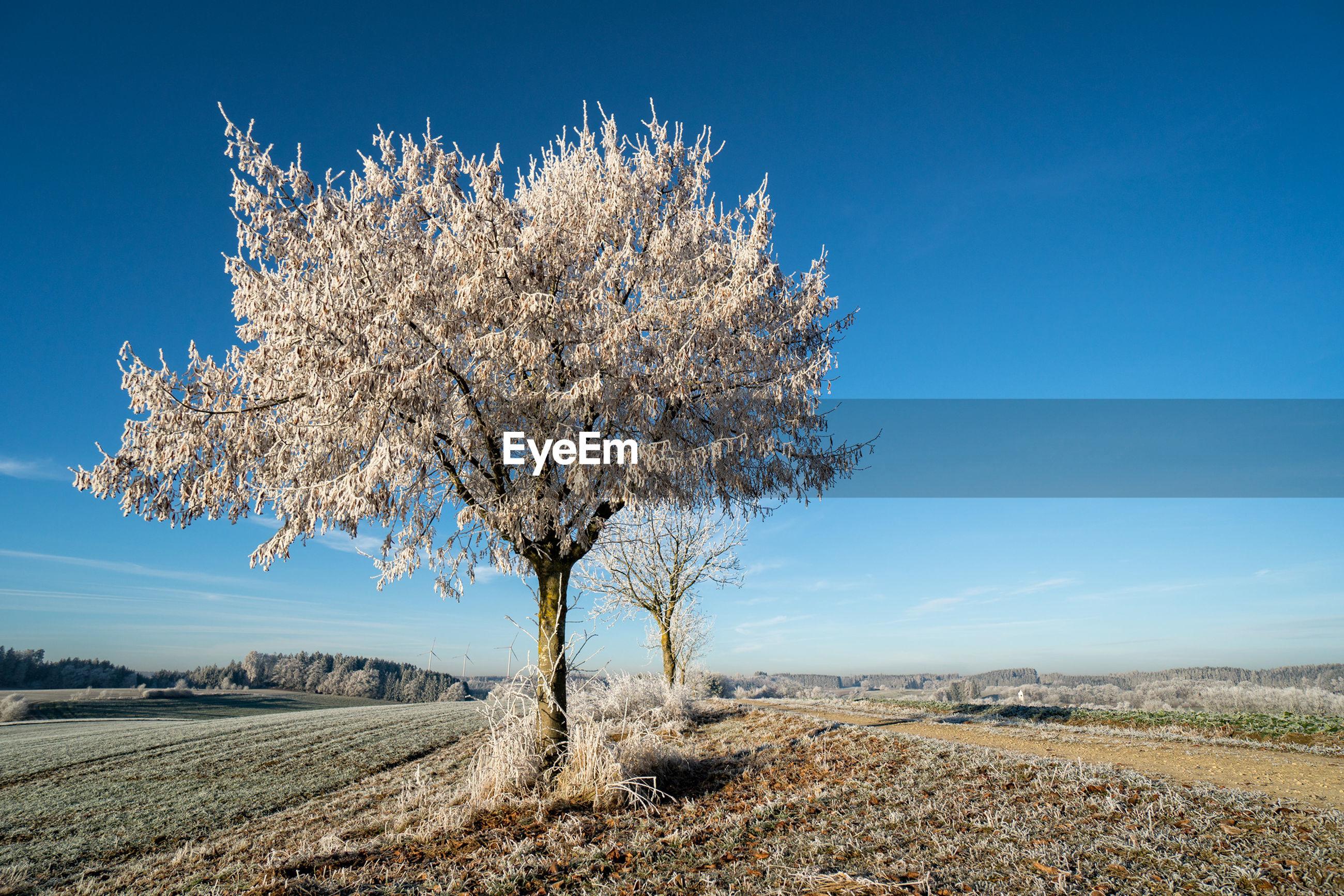 SINGLE TREE IN FIELD
