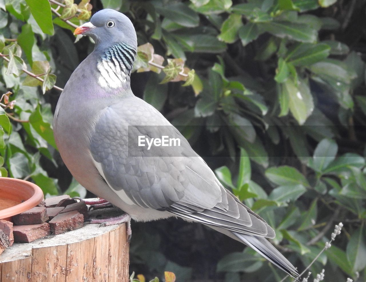 bird, vertebrate, animal themes, animal, animals in the wild, animal wildlife, perching, one animal, no people, tree, plant, close-up, day, nature, focus on foreground, dove - bird, branch, pigeon, outdoors, leaf