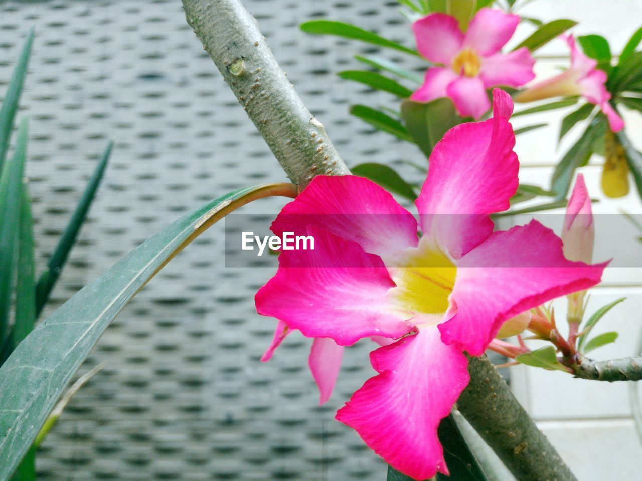 flower, growth, fragility, petal, beauty in nature, plant, freshness, nature, flower head, day, pink color, no people, close-up, outdoors, blooming, leaf, day lily