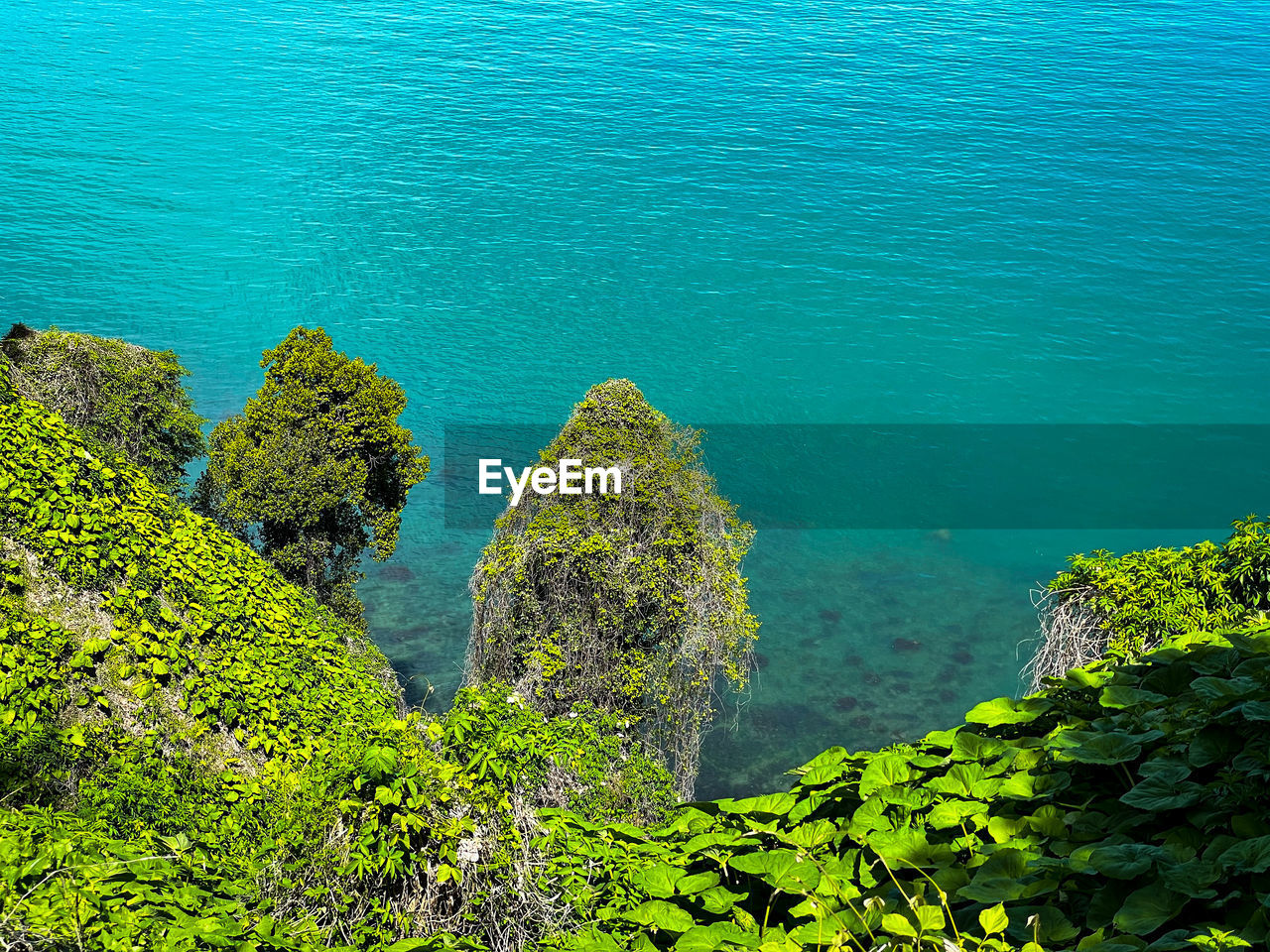 HIGH ANGLE VIEW OF PLANTS BY SEA AGAINST CLEAR SKY